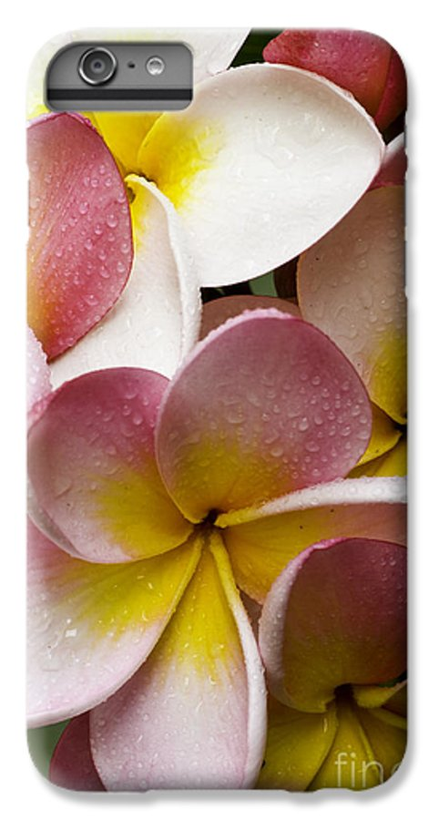 Pink Frangipani IPhone 6 Plus Case featuring the photograph Pink Frangipani by Avalon Fine Art Photography