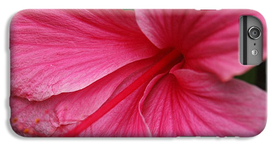 Pink IPhone 6 Plus Case featuring the photograph Pink Hibiscus by Kathy Schumann