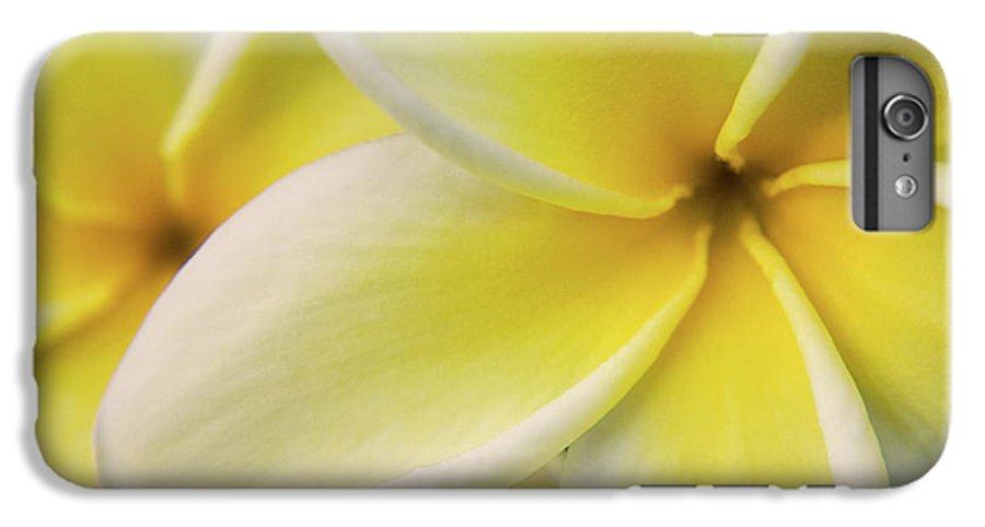Nature IPhone 6 Plus Case featuring the photograph Plumeria Flowers by Julia Hiebaum