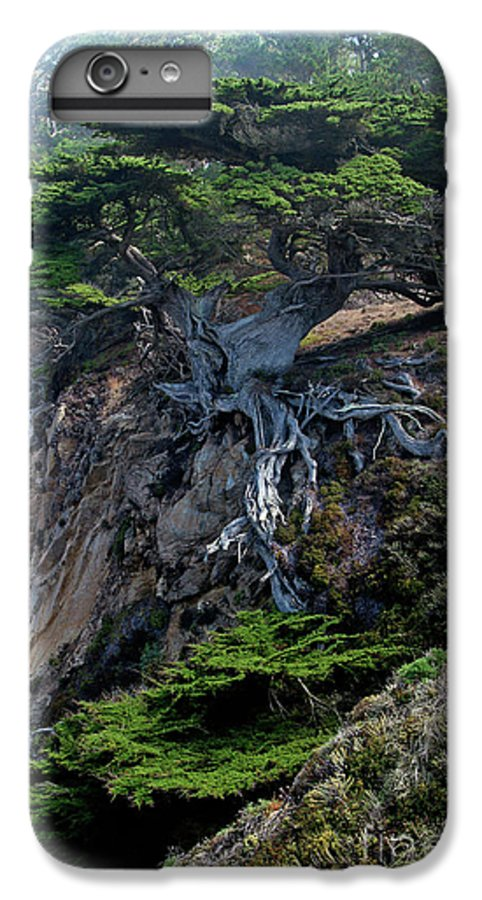 Landscape IPhone 6 Plus Case featuring the photograph Point Lobos Veteran Cypress Tree by Charlene Mitchell