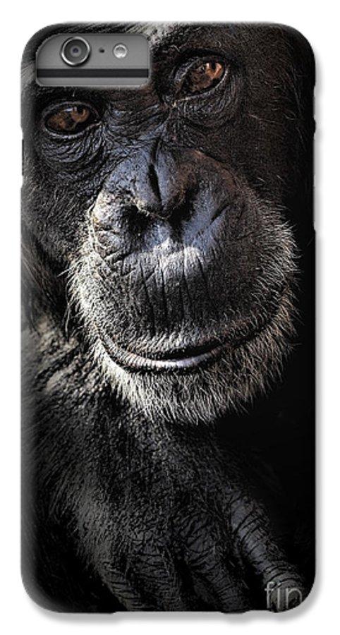 Chimp IPhone 6 Plus Case featuring the photograph Portrait Of A Chimpanzee by Avalon Fine Art Photography