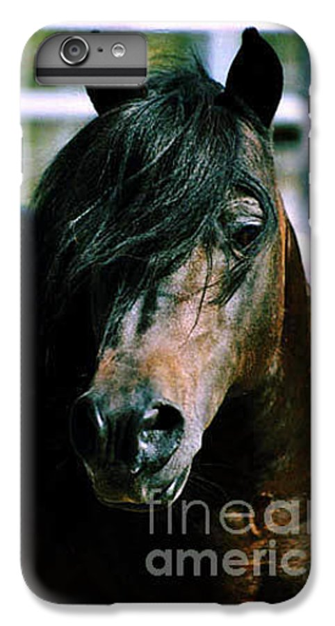 Horse IPhone 6 Plus Case featuring the photograph Portrait Of His Majesty - The King by Kathy McClure