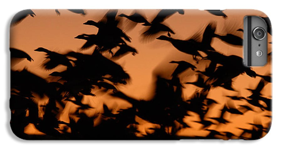 Geese IPhone 6 Plus Case featuring the photograph Pre-dawn Flight Of Snow Geese Flock by Max Allen