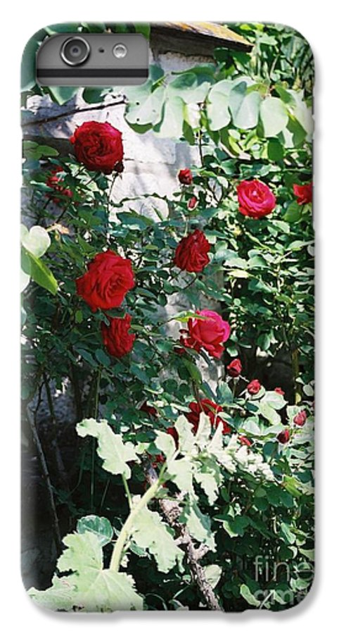 Floral IPhone 6 Plus Case featuring the photograph Provence Red Roses by Nadine Rippelmeyer