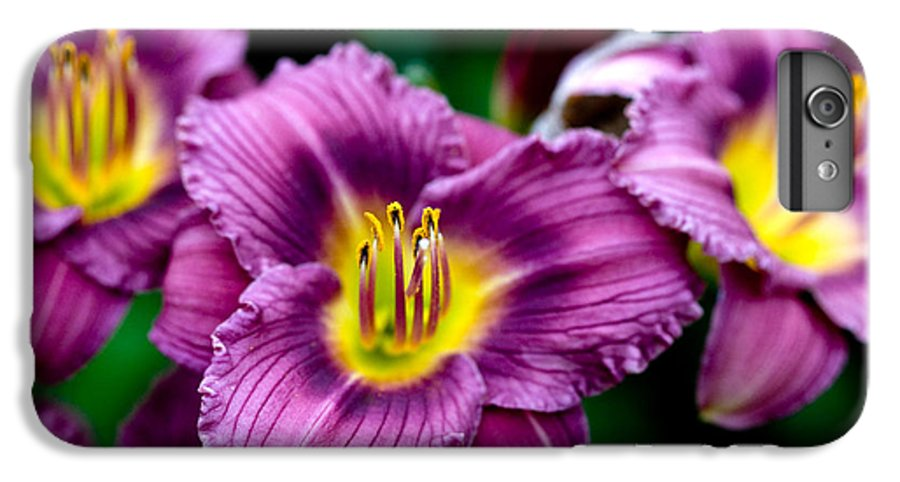 Flower IPhone 6 Plus Case featuring the photograph Purple Day Lillies by Marilyn Hunt