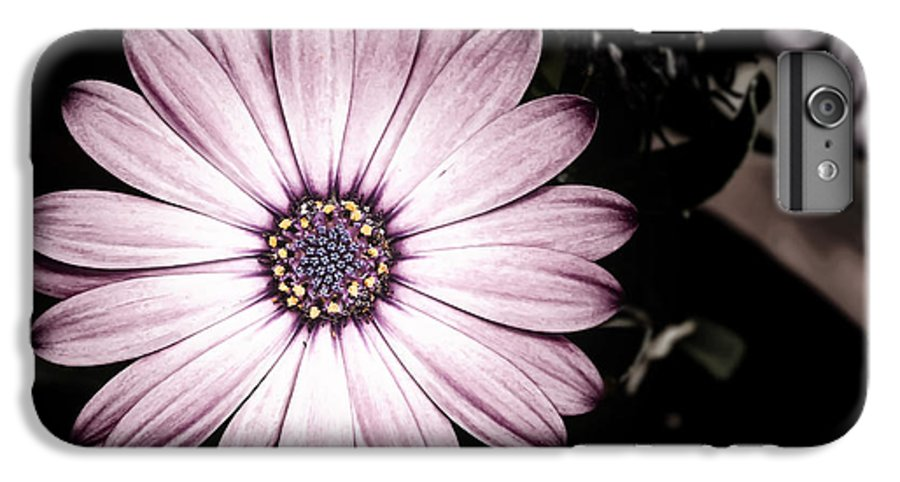 Flower IPhone 6 Plus Case featuring the photograph Purple Flower by Al Mueller
