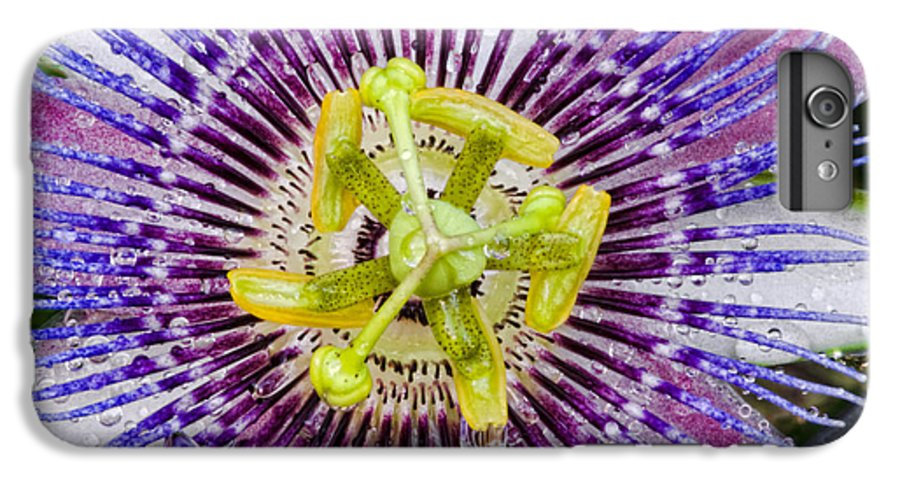 Passion IPhone 6 Plus Case featuring the photograph Purple Radial by Christopher Holmes