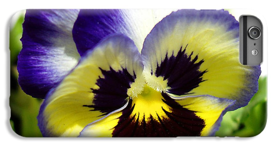 Pansy IPhone 6 Plus Case featuring the photograph Purple White And Yellow Pansy by Nancy Mueller