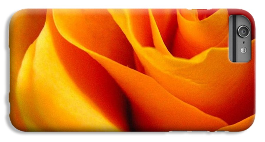 Rose IPhone 6 Plus Case featuring the photograph Queen Rose by Rhonda Barrett