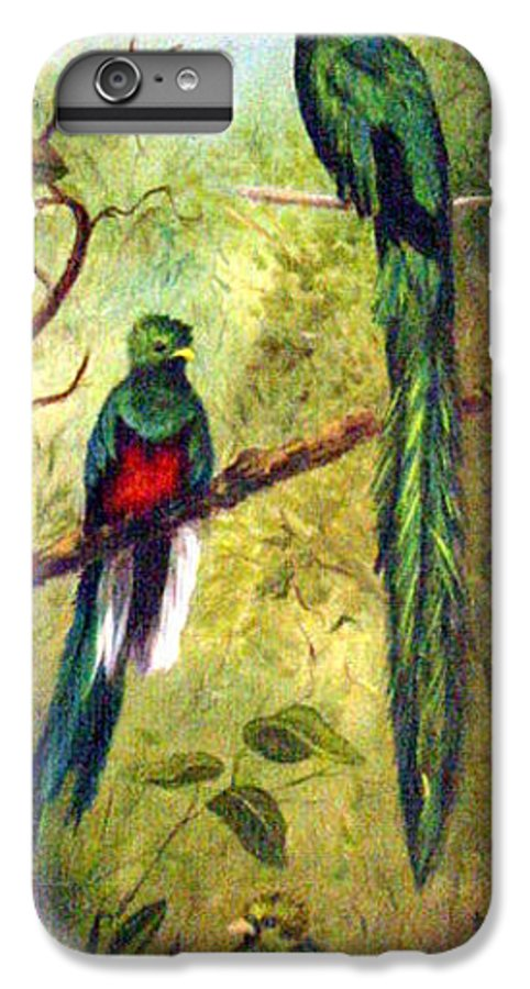 Landscape IPhone 6 Plus Case featuring the painting Quetzels by Anne Kushnick