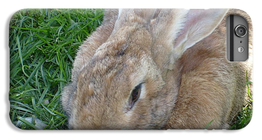 Rabbit IPhone 6 Plus Case featuring the photograph Rabbit Head On by Melissa Parks