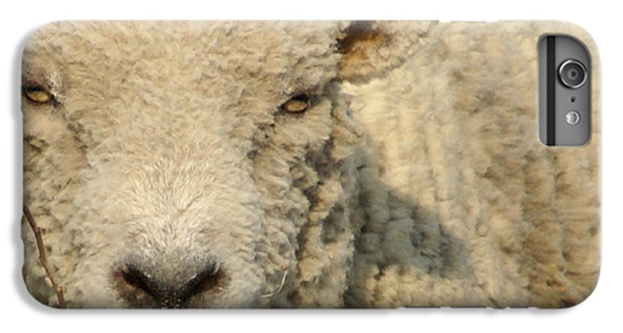 Farm Animal IPhone 6 Plus Case featuring the photograph Ramsy - Debbie-may by Debbie May