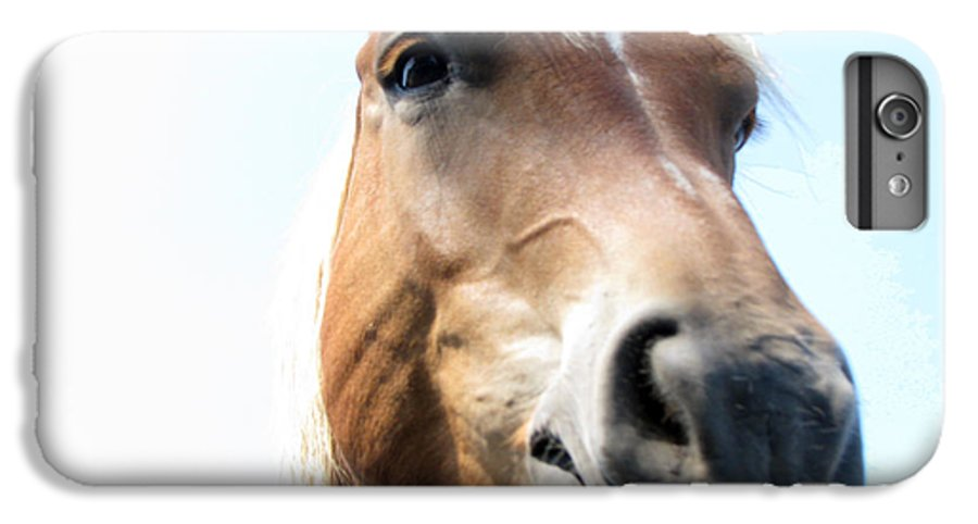 Horse IPhone 6 Plus Case featuring the photograph Really by Amanda Barcon