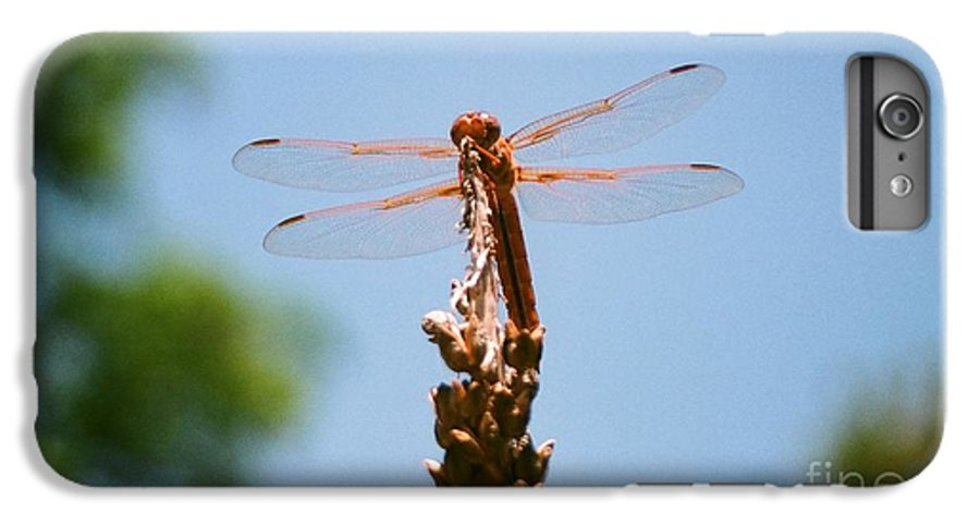 Dragonfly IPhone 6 Plus Case featuring the photograph Red Dragonfly by Dean Triolo