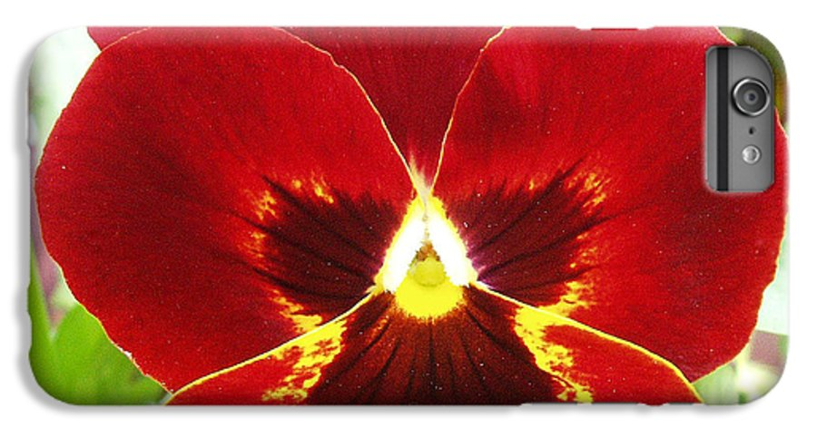 Red IPhone 6 Plus Case featuring the photograph Red Pansy by Nancy Mueller
