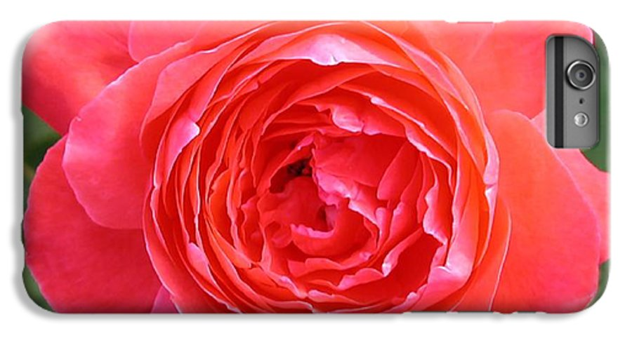 Photograph IPhone 6 Plus Case featuring the photograph Red Rose by Dave Martsolf
