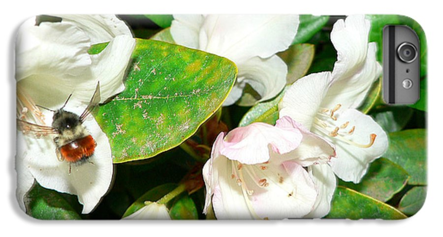 Bee IPhone 6 Plus Case featuring the photograph Rhododendron And Bee by Larry Keahey