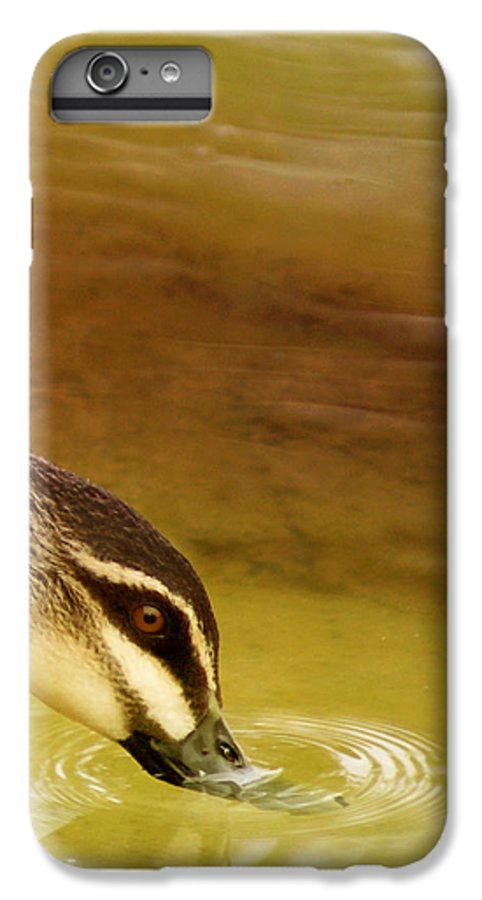 Animals IPhone 6 Plus Case featuring the photograph Ripples by Holly Kempe