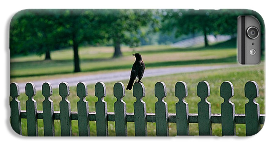 Bird IPhone 6 Plus Case featuring the photograph Robin On A Fence by Lone Dakota Photography
