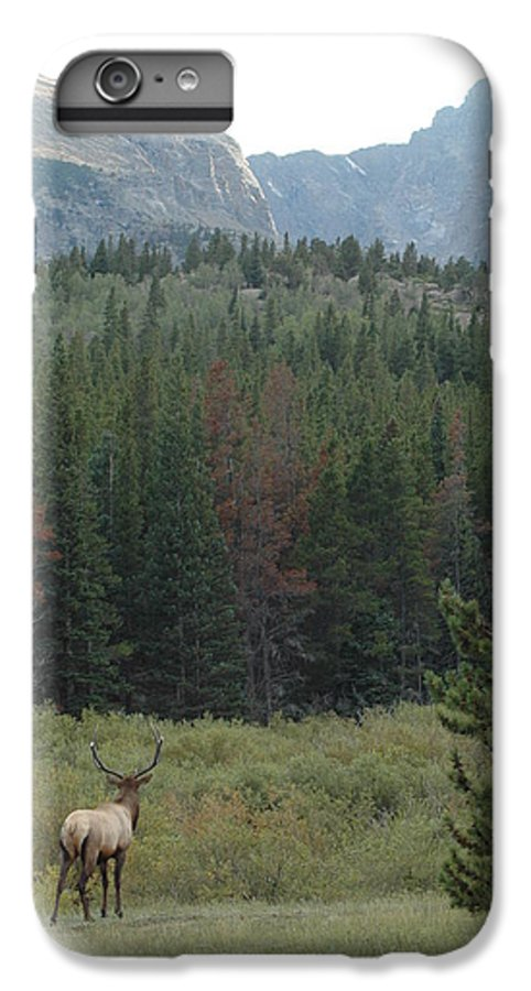 Elk IPhone 6 Plus Case featuring the photograph Rocky Mountain Elk by Kathy Schumann