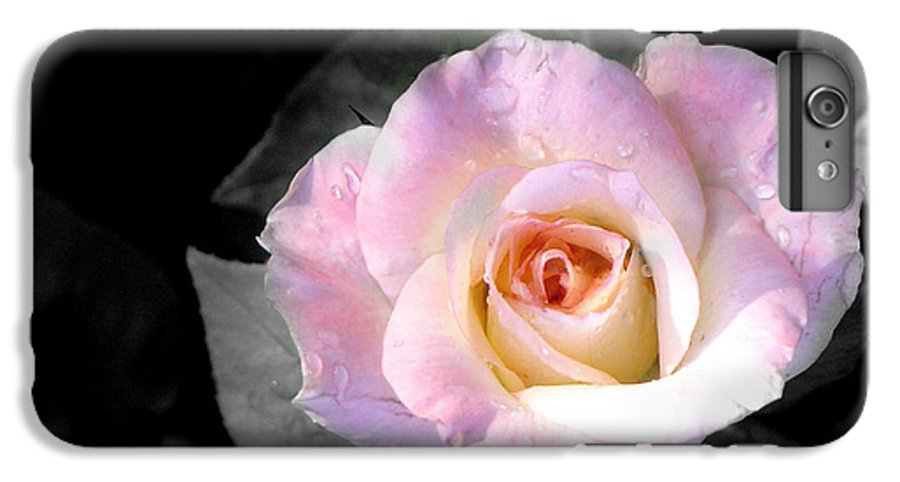 Princess Diana Rose IPhone 6 Plus Case featuring the photograph Rose Emergance by Steve Karol
