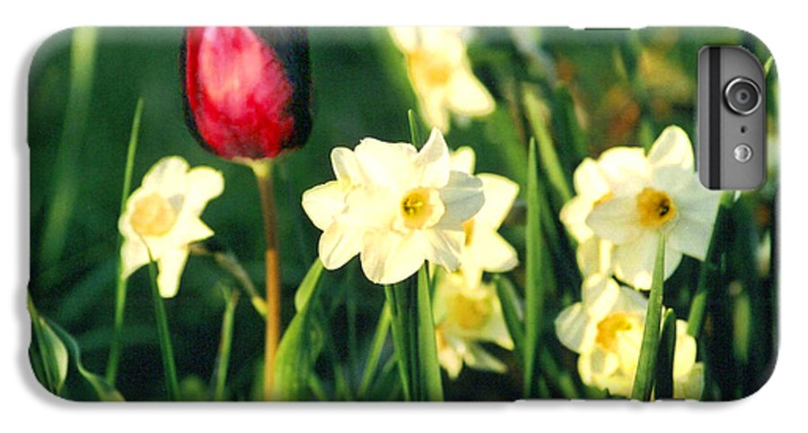 Tulips IPhone 6 Plus Case featuring the photograph Royal Spring by Steve Karol