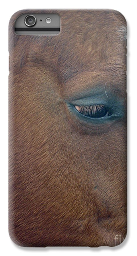 Horse IPhone 6 Plus Case featuring the photograph Sad Eyed by Shelley Jones
