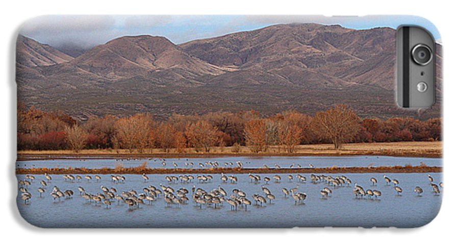 Sandhill Crane IPhone 6 Plus Case featuring the photograph Sandhill Cranes Beneath The Mountains Of New Mexico by Max Allen