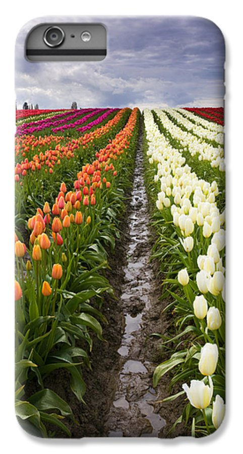Tulips IPhone 6 Plus Case featuring the photograph Sea Of Color by Mike Dawson
