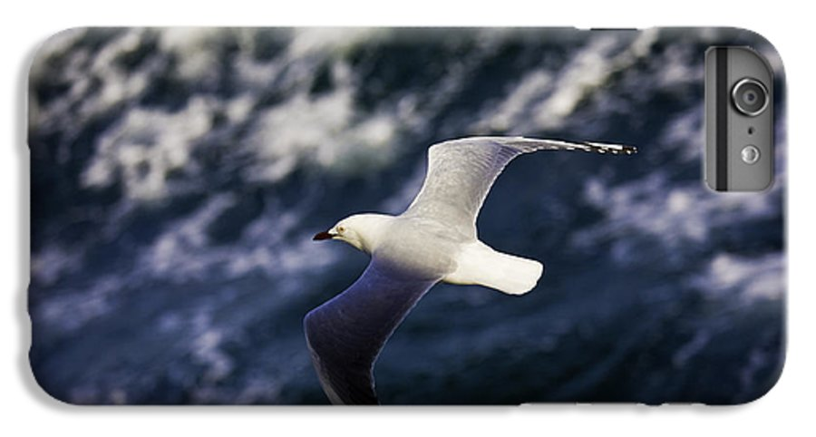 Seagull IPhone 6 Plus Case featuring the photograph Seagull In Wake by Avalon Fine Art Photography