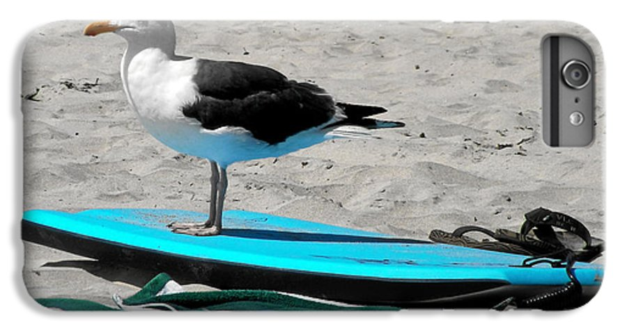 Bird IPhone 6 Plus Case featuring the photograph Seagull On A Surfboard by Christine Till