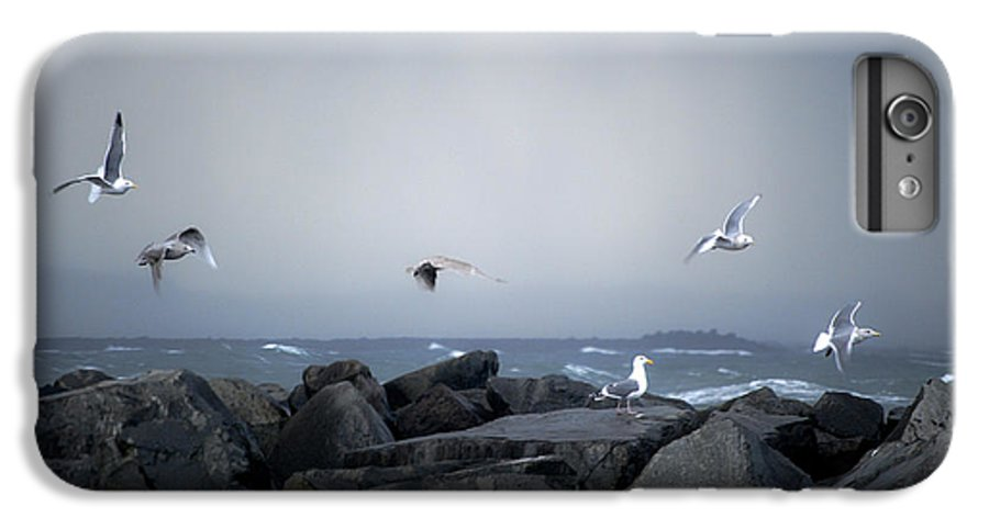 Landscape IPhone 6 Plus Case featuring the photograph Seagulls In Flight by Larry Keahey