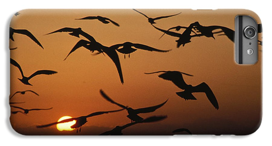 Birds IPhone 6 Plus Case featuring the photograph Seagulls In Sunset by Carl Purcell