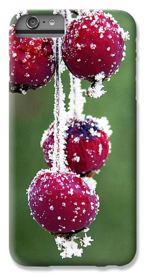 Berries IPhone 6 Plus Case featuring the photograph Seasonal Colors by Marilyn Hunt