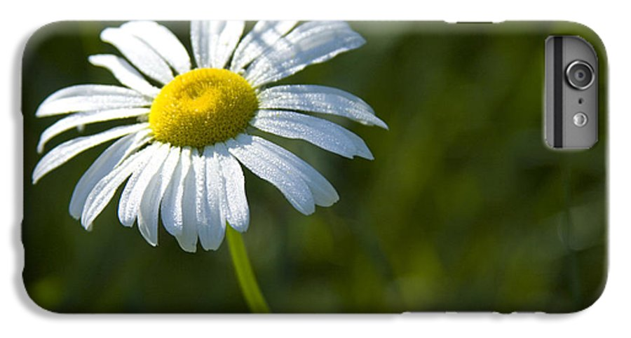 Daisy IPhone 6 Plus Case featuring the photograph Searching For Sunlight by Idaho Scenic Images Linda Lantzy