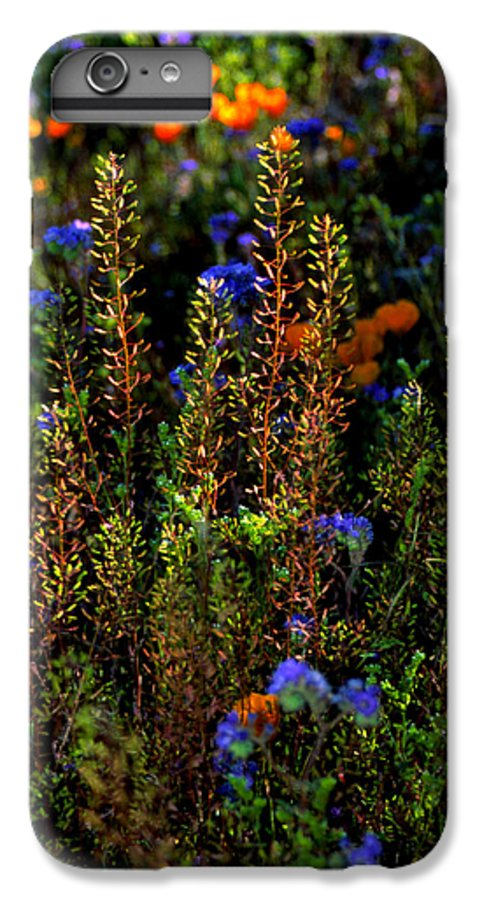 Flowers IPhone 6 Plus Case featuring the photograph Shimmers by Randy Oberg