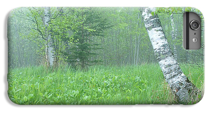 Landscape IPhone 6 Plus Case featuring the photograph Silent Birch by Bill Morgenstern