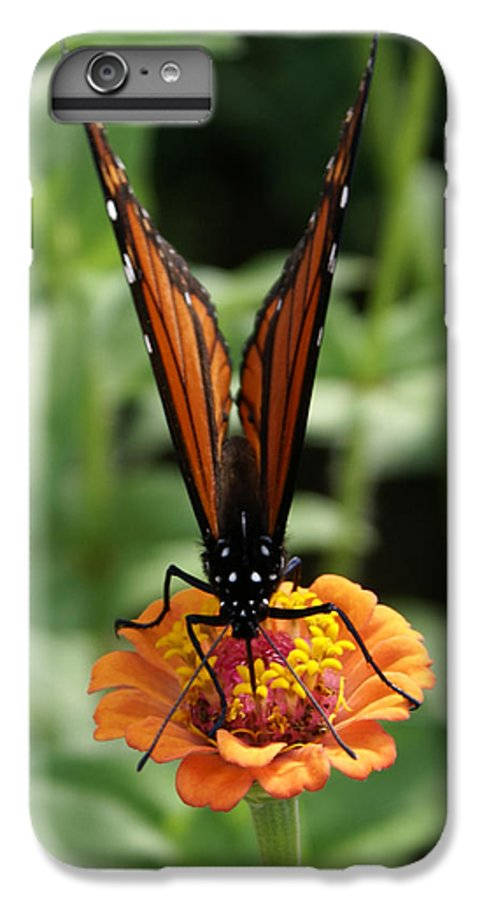 Butterflies IPhone 6 Plus Case featuring the painting Sip Sip Away by Debbie May