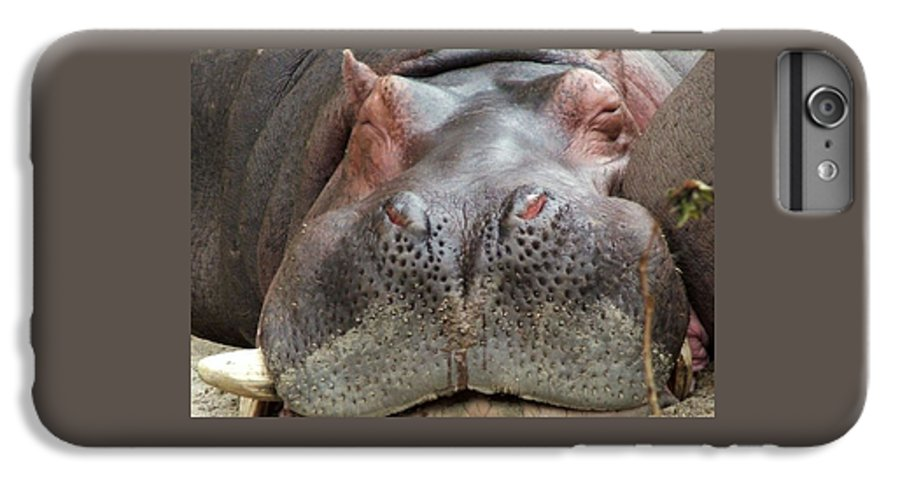 Hippopotamus IPhone 6 Plus Case featuring the photograph Sleeping Hippo by Tiffany Vest