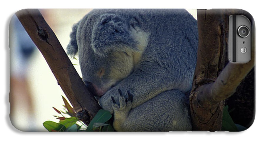 Sleep IPhone 6 Plus Case featuring the photograph Sleepy Koala Bear by Carl Purcell