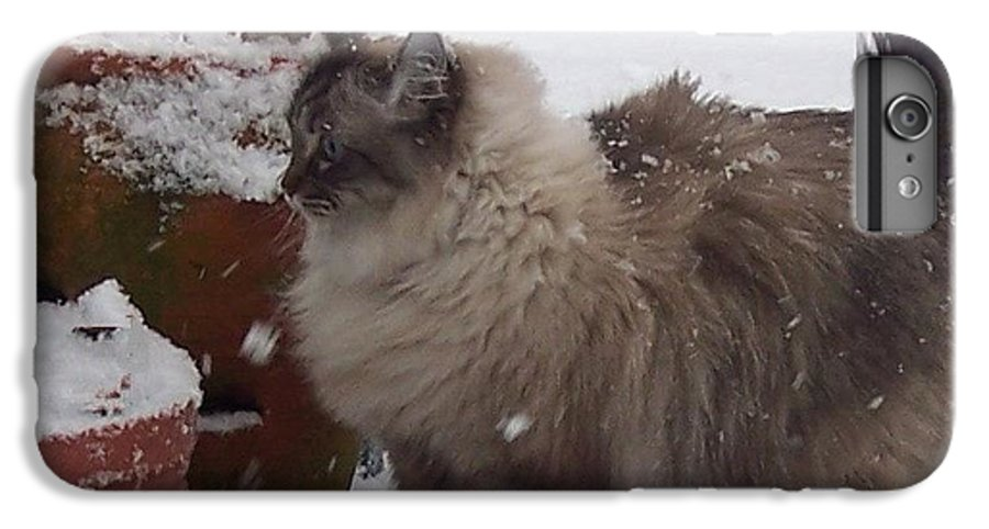 Cats IPhone 6 Plus Case featuring the photograph Snow Kitty by Debbi Granruth