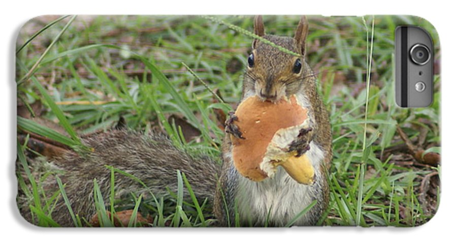 Squirrel IPhone 6 Plus Case featuring the painting Sometimes I Feel Like A Nut by Debbie May