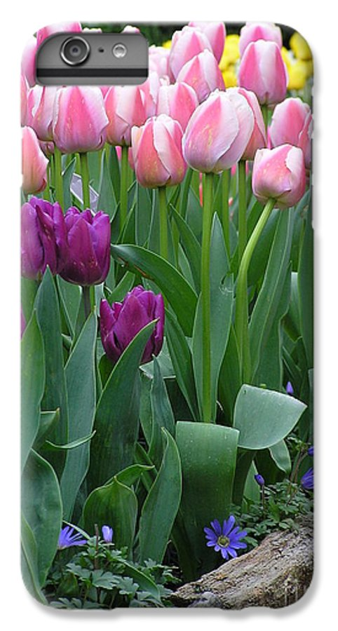 Tulips IPhone 6 Plus Case featuring the photograph Spring Colors by Louise Magno