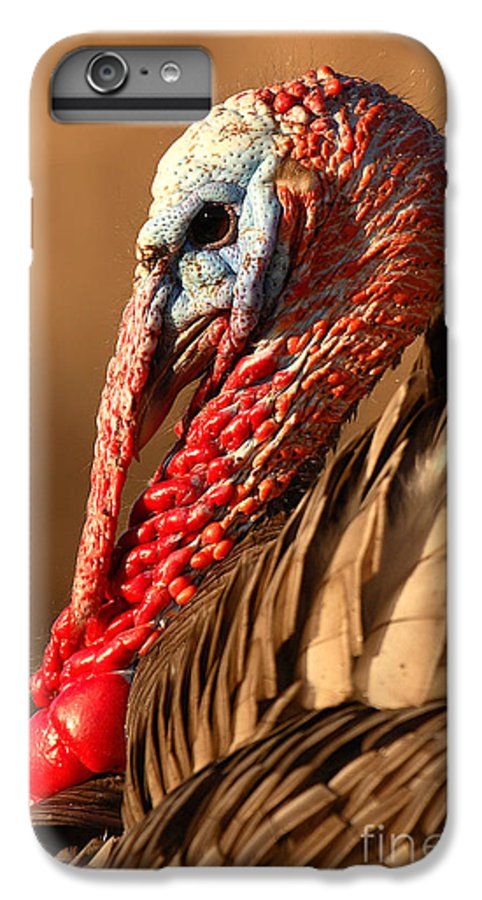Turkey IPhone 6 Plus Case featuring the photograph Spring Portrait Of Wild Turkey Tom by Max Allen