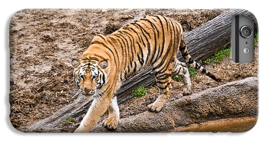 Tiger IPhone 6 Plus Case featuring the photograph Stalking Tiger - Bengal by Douglas Barnett