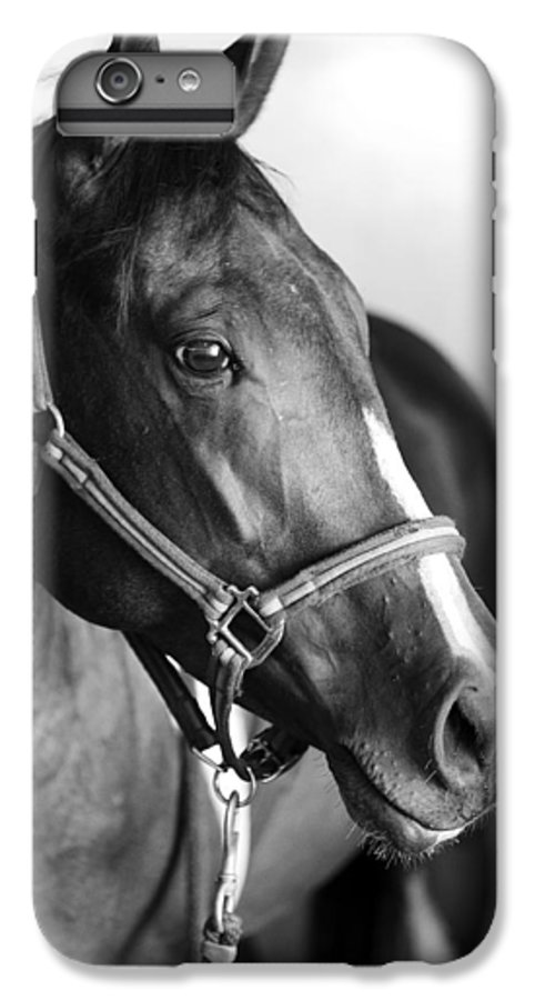 Horse IPhone 6 Plus Case featuring the photograph Horse And Stillness by Marilyn Hunt