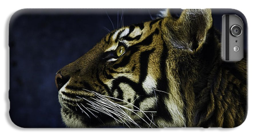 Sumatran Tiger IPhone 6 Plus Case featuring the photograph Sumatran Tiger Profile by Avalon Fine Art Photography