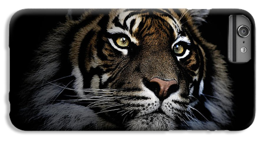 Sumatran Tiger Wildlife Endangered IPhone 6 Plus Case featuring the photograph Sumatran Tiger by Sheila Smart Fine Art Photography