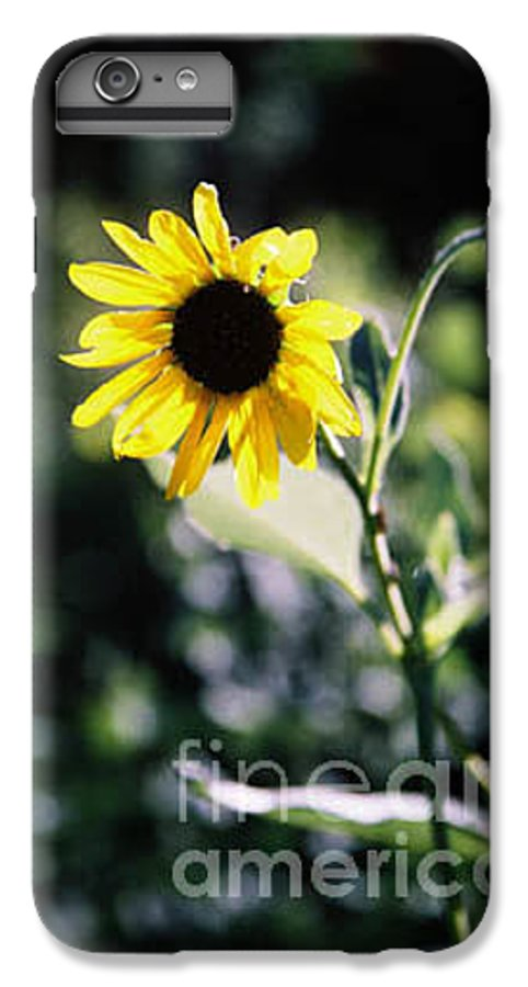 Sunflower IPhone 6 Plus Case featuring the photograph Summer Sunshine by Kathy McClure