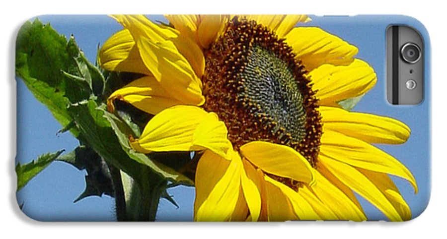 Sunflower IPhone 6 Plus Case featuring the photograph Sun Goddess by Suzanne Gaff